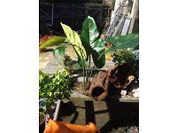 Vivarium plants and bark
