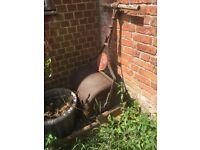 Antique cast iron grass roller