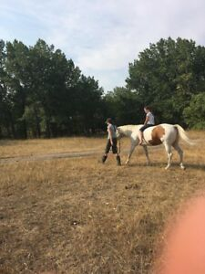 10 Year Old Paint Quarter Horse