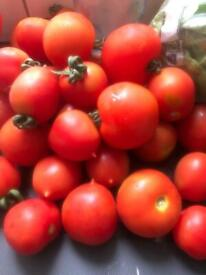 Tomatoes and runner beans