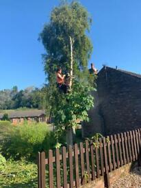 JM Tree Care