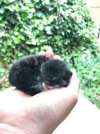5 kittens + mum (<1year)