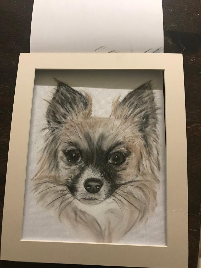 Pet drawings