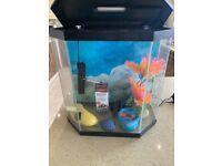 Led light fish tank like new