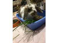 Two rabbits (read ad to understand price)