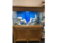 Aqua Solid Oakwood 4ft marine/tropical fish tank aquarium with setup