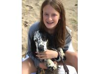 Au pair needed for fun, friendly family in Fulham with two teenage girls and one lovely dog!
