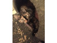 Loving kittens need new home