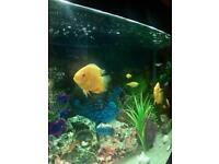 *** Golden severum fishes and parrot fishes ***