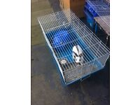 2 Year old Male Rabbit with cage.