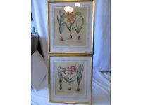 Pair of Vintage Framed Large Botanical Prints of Spring Bulbs. Gilt Wood Frames