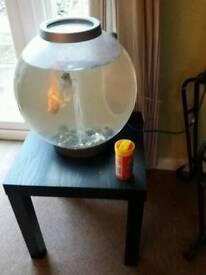 Biorb 30L fish bowl for sale