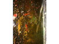 Tropical fish and cold water fish (suckafish, angel fish)