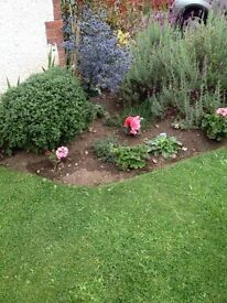 Fresh Tidy gardening in Edinburgh £9 per hour