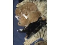 New born kittens for sale