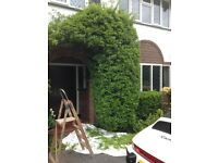 Local gardener with over five years of experience available for both one off and regular work