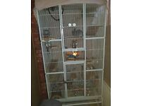 4 male chinchillas and large Cage