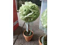 Wedding decor, decorative flower, plant pot. Green.