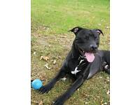 tempoary home needed for lovely dog