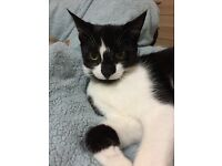 MISSING -Black and white cat