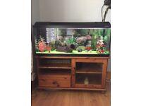 Full set up aquarium and fish for sale