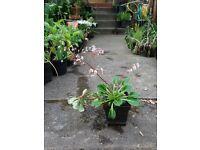 Garden plants - various