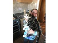 Missing cat answers to izzy family pet he is missed so much