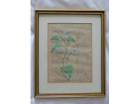 Framed Botanical Plate - Hand Coloured