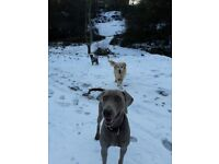 Dog walker- Muddy paws of notting hill /walking,daycare & boarding