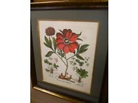 Stunning framed print - large - top quality framed print - perfect condition - lovely red flower