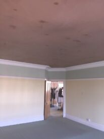 Sbd plastering. Clean reliable and trustworthy