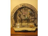 Pair budgies with cage (one hand tamed)