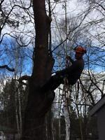 DZ Trees - Tree removal - arborist