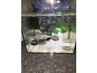 25l glass fish tank