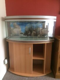 Bow fronted aquarium with matching cabinet