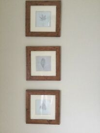 Set of three leaf print pictures