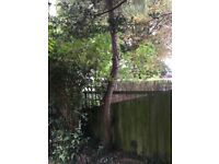 Help! Need a tree to be taken down and away please
