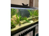 52 litre Tropical fish tank.