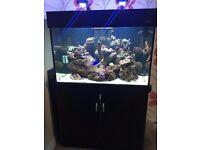 Aqua one 300 black marine/tropical fish tank aquarium with setup (delivery/installation)