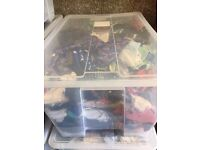 Massive baby cloths, toys, books clear out - £50 for the lot