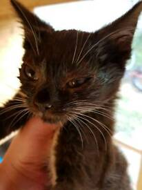 Rescue Kitten partly blind in one eye last male left full black