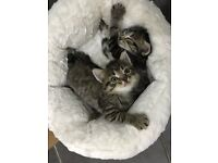 ***ADORABLE KITTENS FOR SALE***