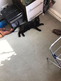 Lost! Black female cat - much loved