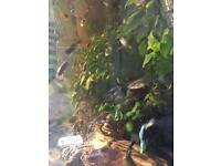 10 guppies (fish) available