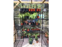 Plants currently for sale