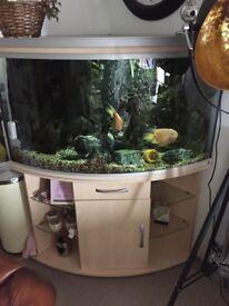 rena 350 fish tank aquarium