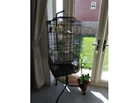 Budgies with large cage for sale