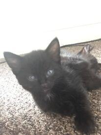 Gorgeous kittens ready for there forever home