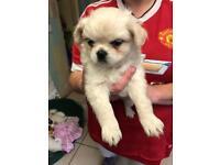 Boy chug puppy