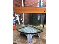 Big fish tank Aqua one